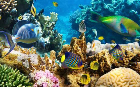 coral, риф, fish