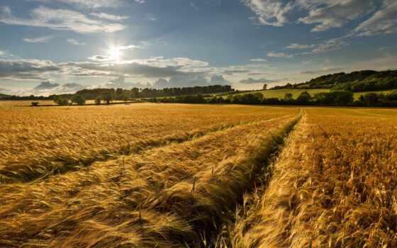 природа, landscape, поле, sun, качать, небо, дерево, summer, свет, дорогой, тематика