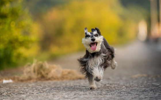 собаки, zhivotnye, взгляд