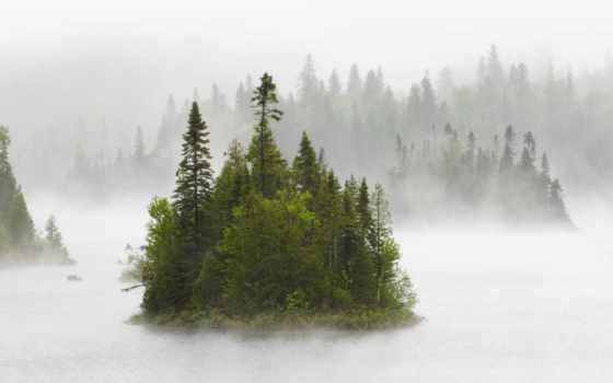 лес, озеро, туман