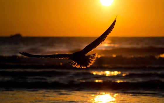 море, закат, волна, water, природа, sun, река,