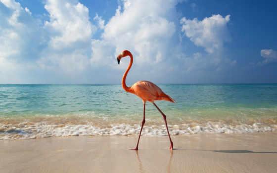 zhivotnye, птицы, фламинго,