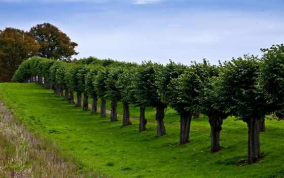 trees, трава, поляна, аллея, german, тропинка, range,