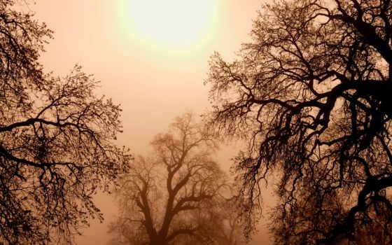 trees, sun, ветки, дерево, небо, снег, summer, природа, день,