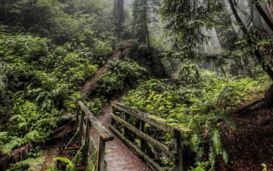 лес, мост, pinterest, adventure, дерево, forests, тропинка, природа,
