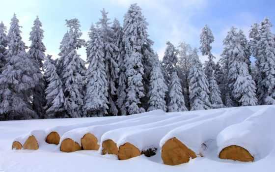 fondo, pantalla, invierno, nieve, escritorio, bosque, fondos, del, голова, rboles,