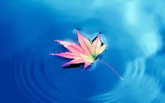 leaf, water, листья, maple, осень, stock, плавающий, листва, falling, зелёный,