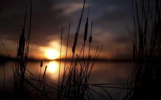 размытие, макро, природа, закат, sun, небо, растение, боке, широкоформатные, колоски,