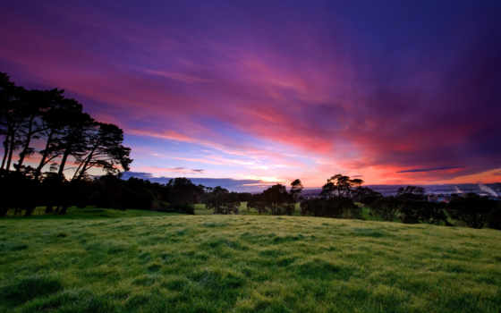 трава, небо, trees, зелёный, вечер, закат, поляна, природа,