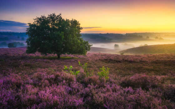 albert, dros, пейзажи -, holland, card, утро, stunningly, яndex, красивое, голландии,