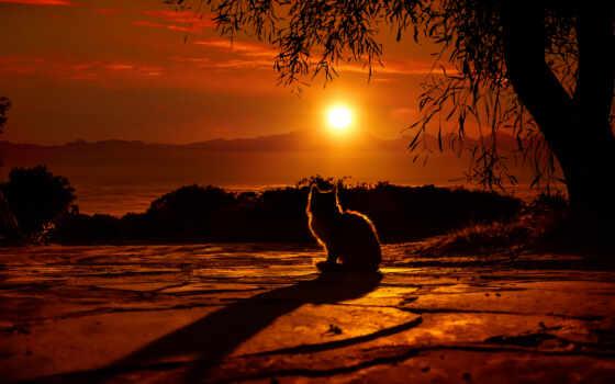 кот, sun, закат, природа, небо