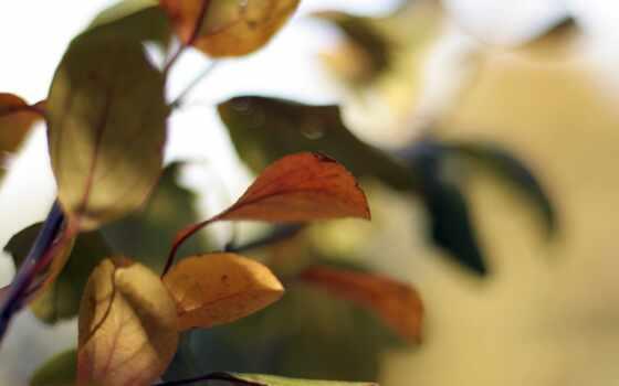 facebook, лист, природа, cover, трава, vkontakt, branch, картинка, дерево