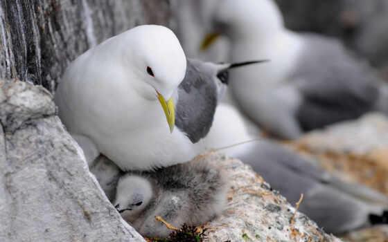 чайка, птица, гнездо, птенцы, max, животные,