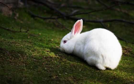 кролик, white, лесу