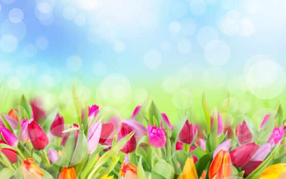 клипарт, весенние, цветы, вектор, растровый, векторе, фоны, цветами, тюльпаны, букет, summer,
