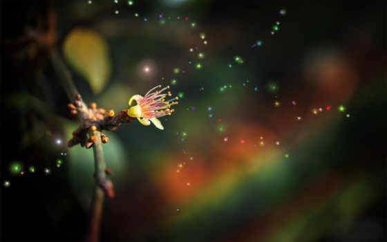 цветок, огоньки