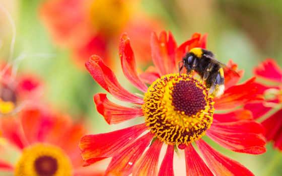insects, flores, insectos, насекомые, abejas, las, zhivotnye, природа, los,