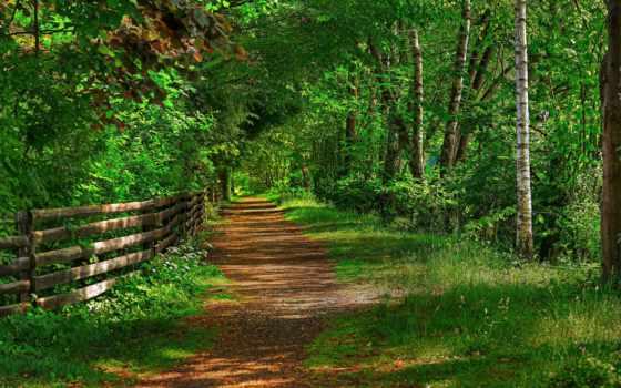 camino, pantalla, verde, fondo, bambù, pinterest, rboles, fondos,