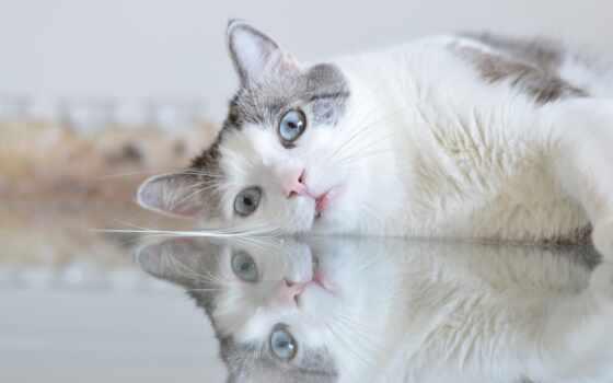кот, хороший, смотреть, narrow, взгляд, морда, blue, глаз