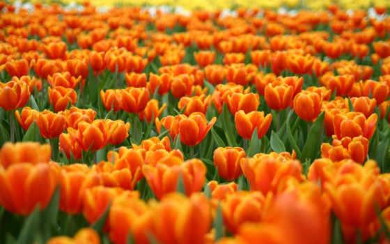 цветы, природа Фон № 20000 разрешение 1920x1200