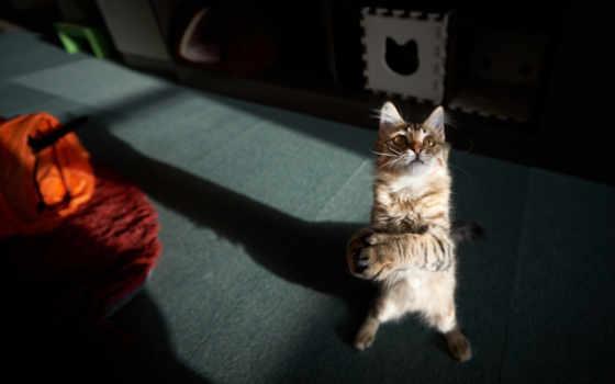 кот, комната