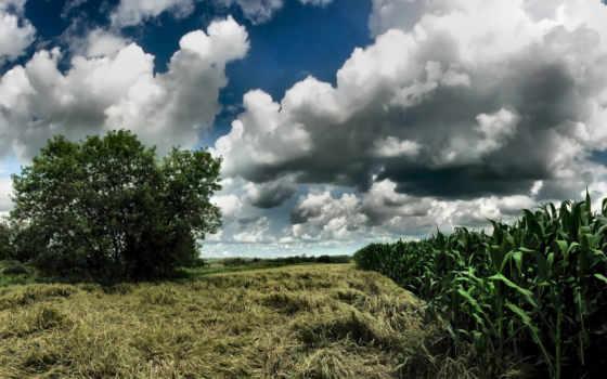 кукуруза, небо