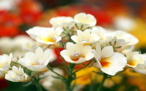 vũ, huyền, ngọc, linh, flowers, nice,