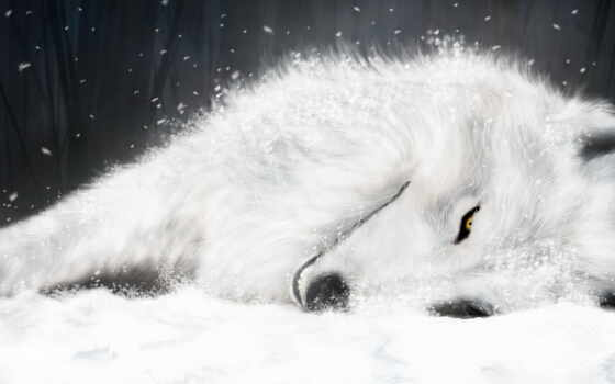 волк, волки, white