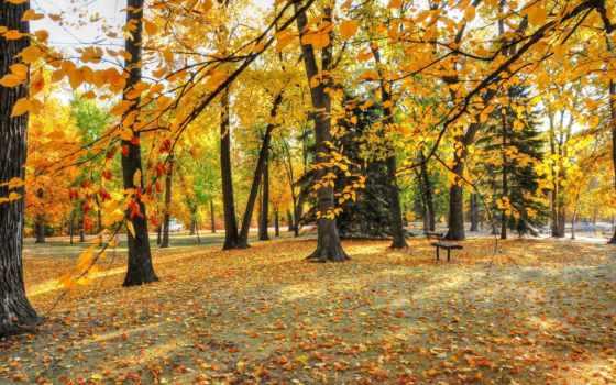 осень, park, листва, природа, trees, парке,