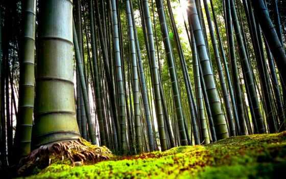 природа, japanese, бамбук, красивые, kyoto, лес, заставки, тропинка, мост, нравится, забор,