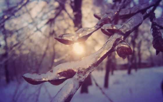 winter, природа, красивые, красиво, макро, лед,