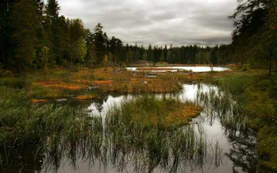 swamp, широкоформатные, трава, качественные, лес, trees, болота, небо,