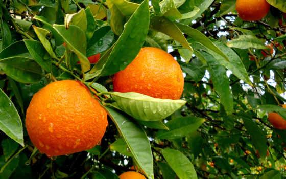 природа, дерево, листва, water, дождь, без, капли, small, водопад, плод, оранжевый,