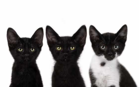 ipad, kittens, три, кот, котята, мини, кошки,