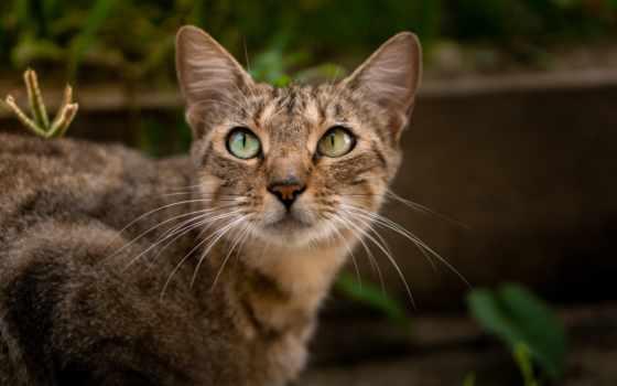 кот, kuce, animal, gratis, hewan, лицо, cute, bild,
