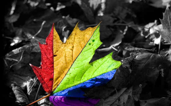 wallpapers, leaf