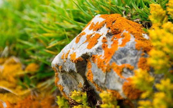 природа, трава, лишай, remit, окно, камень, vista, туман, поле, free, растение