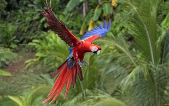 птиц, красивых, павлин