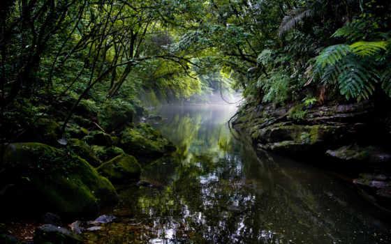 уровень, jungle, ответить, природа, кот, где, лес, расследование, усатое, деревья, game,
