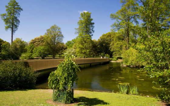 сады, пруд, priroda