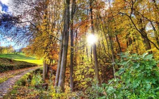лес, hdr, природа