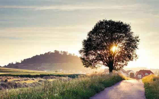 природа, summer, landscape Фон № 172357 разрешение 1920x1080
