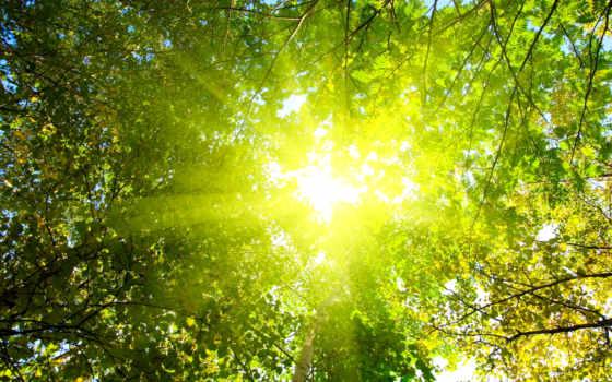 свет, сквозь, яркий, листву, пробивающийся, зеленоватый,