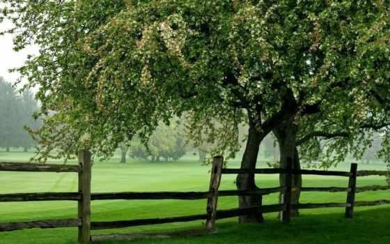 ecran, fonds, arbre, природа, gratuits, hebus, arbres, qualité,