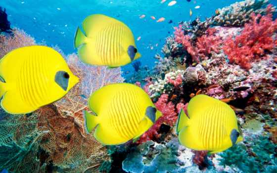 рыбки, кораллы, море