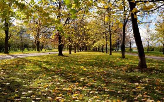 осень, природа, листва, trees, park, парки, осенние, трава, красно, город, желтые,