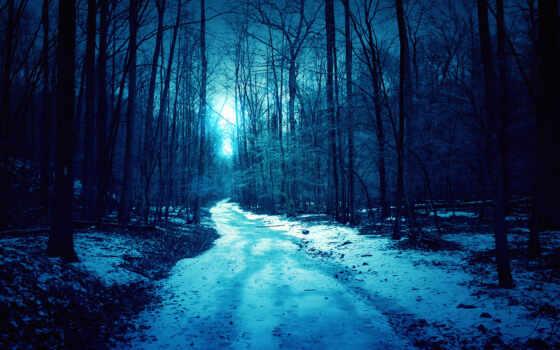 лес, fore, коллекция, природа, дерево, ночь, небо, blue, луна, тропинка, jungle