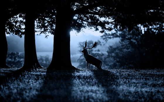 олень, лес