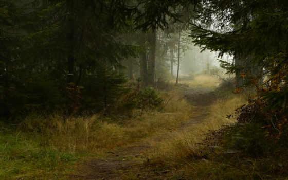 природа, деревья Фон № 22520 разрешение 1920x1200