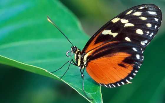 бабочка, cute, blue